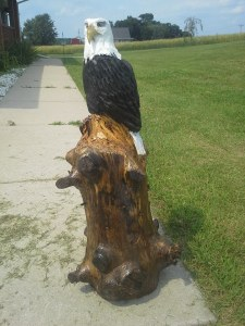 eagle on knobby log