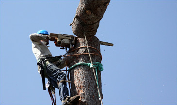 emergency clearance and emergency tree removal