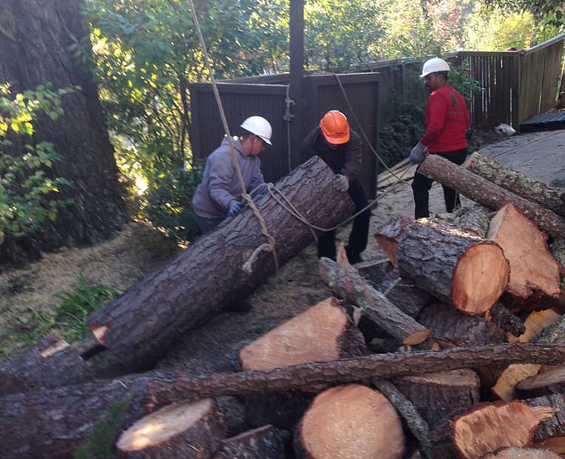 Tree removal in Walnut Creek by Timberland Tree Care