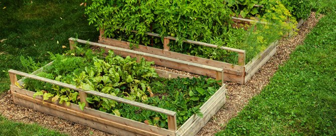 4 key reasons you should be gardening in raised beds