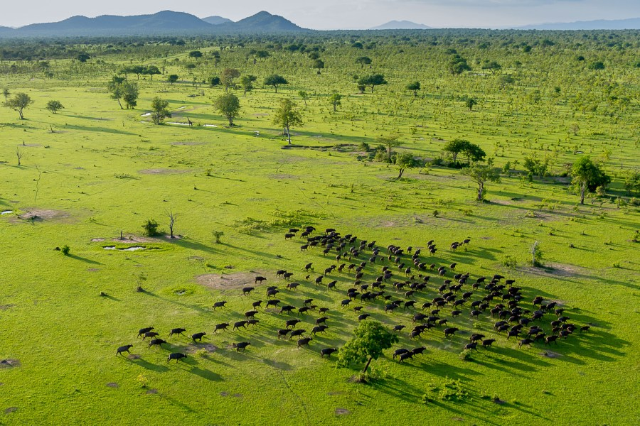 green-season-roho-ya-selous-tanzania