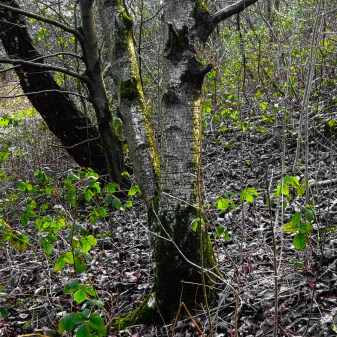 undergrowth3