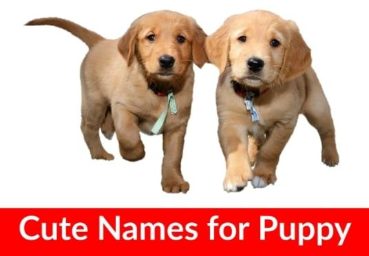 Unique Names for Dogs in India Female, Male