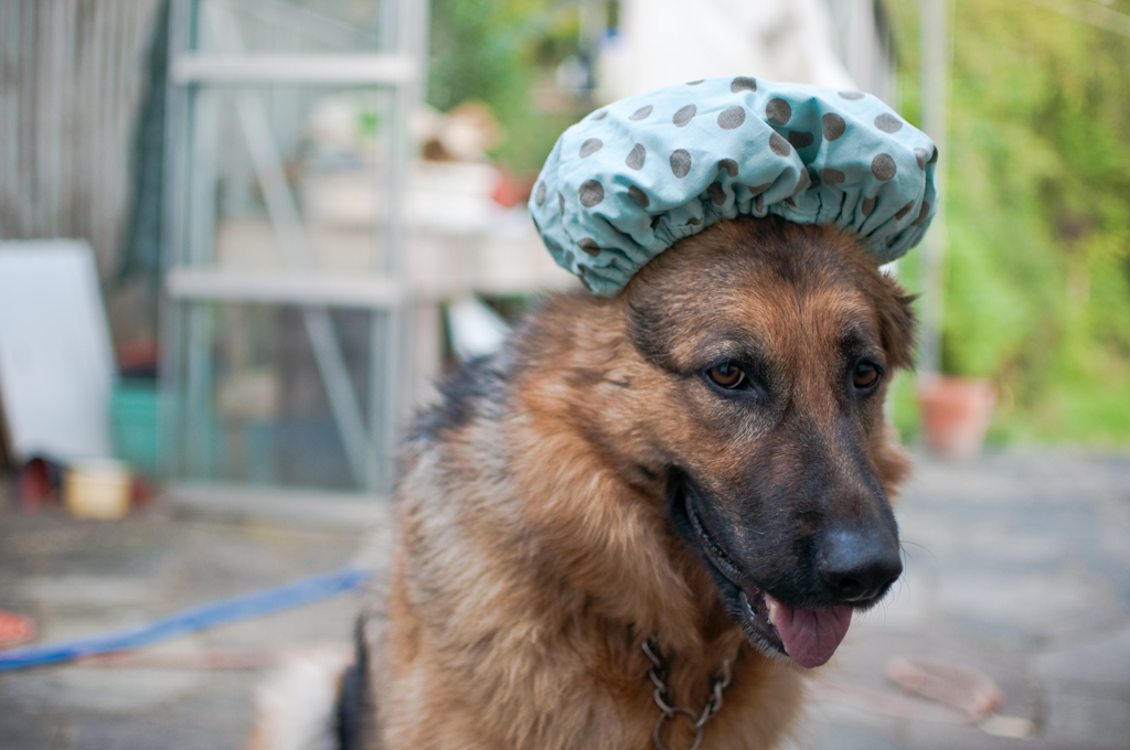 Cody a la shower cap