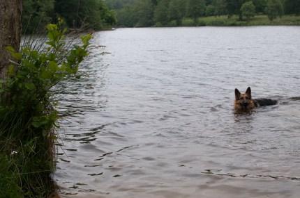 Cody-swimming-8
