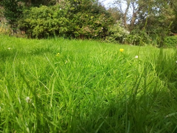 The lawn - before