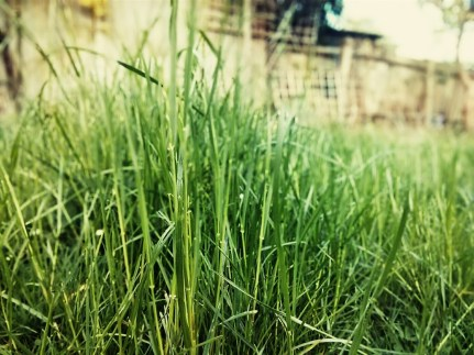 Day 115 It's a jungle out there. Out there being my garden. Jungle being... this mess of grass.