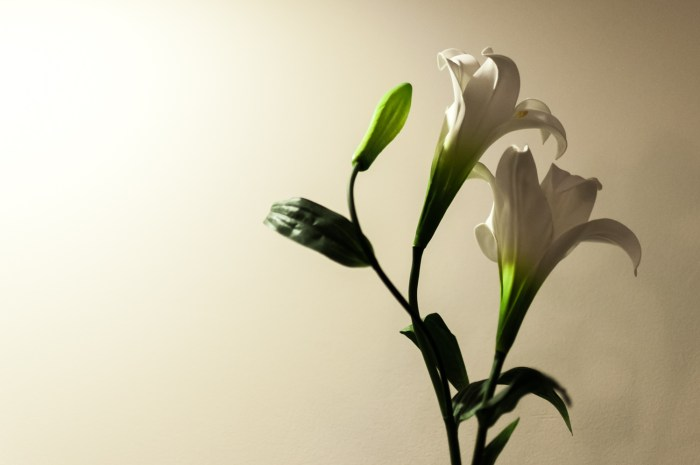 How about a bit of still life for today?