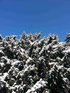 snow-on-trees-07