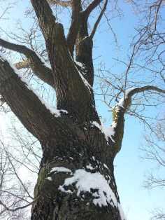 White-blanket-of-snow-04
