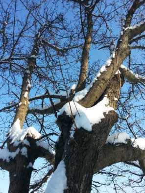 White-blanket-of-snow-06