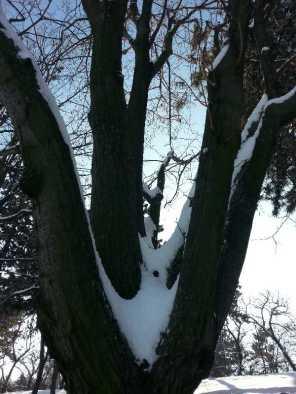 White-blanket-of-snow-12
