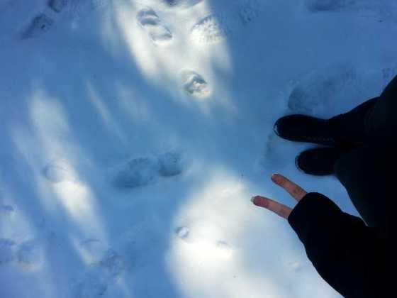snow-traces-03