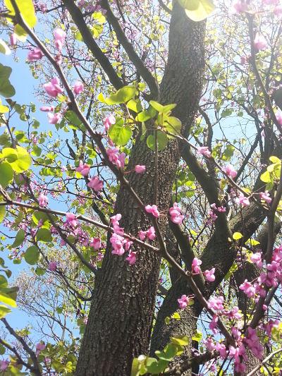 beautiful-pink-flowers-02