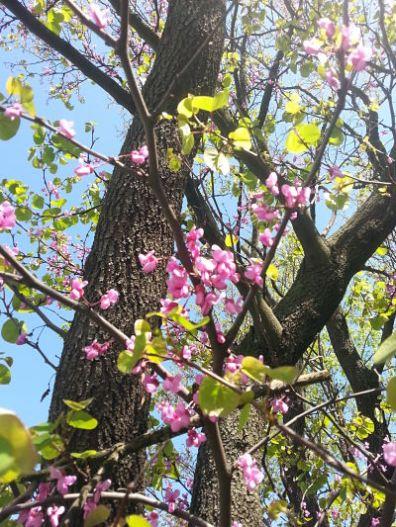 beautiful-pink-flowers-03