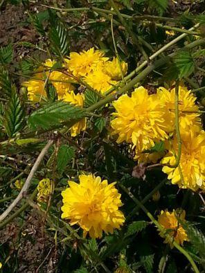 mopana-yellow-land-01