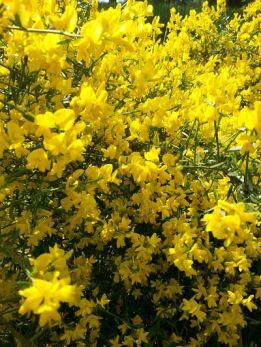 mopana-a-yellow-life-06