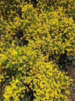 mopana-a-yellow-life-09