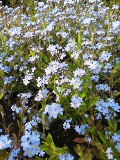 mopana-elegance-in-blue-04