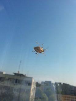 mopana-a-bug-on-my-window-01