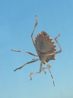 mopana-a-bug-on-my-window-04