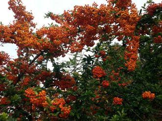 mopana-coloured-fall-01