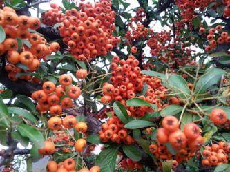 mopana-coloured-fall-02
