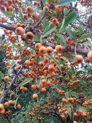 mopana-coloured-fall-04