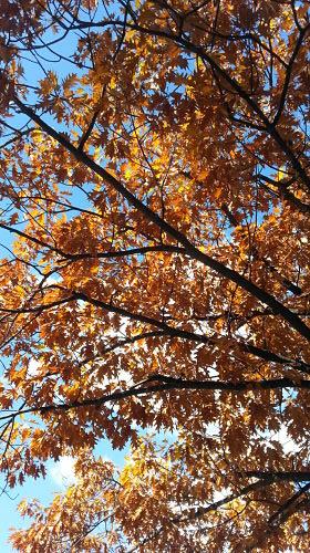 mopana-a-golden-autumn-06