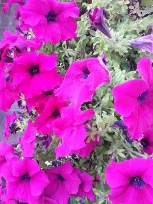 mopana-colors-of-summer-04
