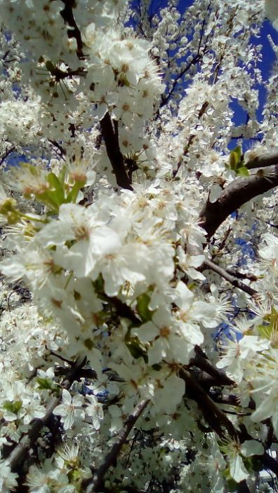 mopana-spring-smile-03