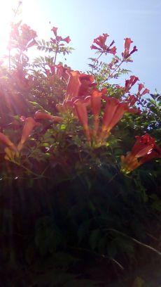 mopana-summer-beauty-05