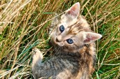 Baby kitty looking up from the grass