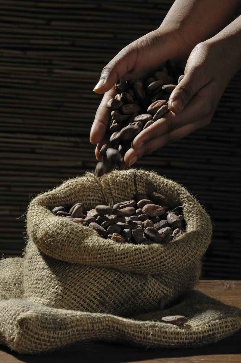 crop person pouring out roasted coffee beans in burlap sack