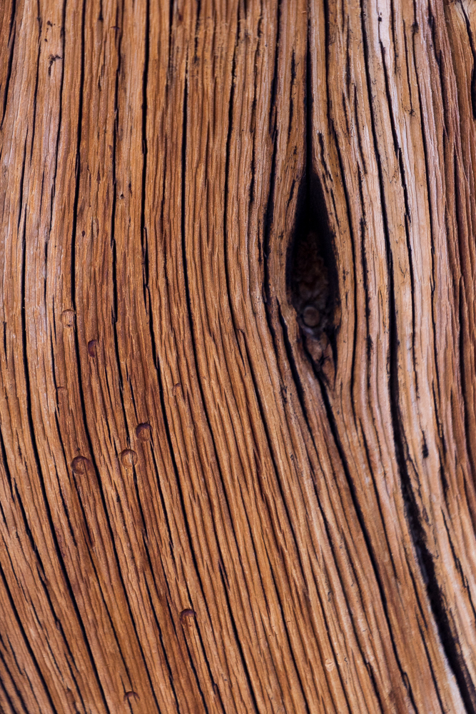 The bark of a tree found on trail.