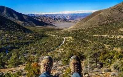 Wildrose Peak Trail