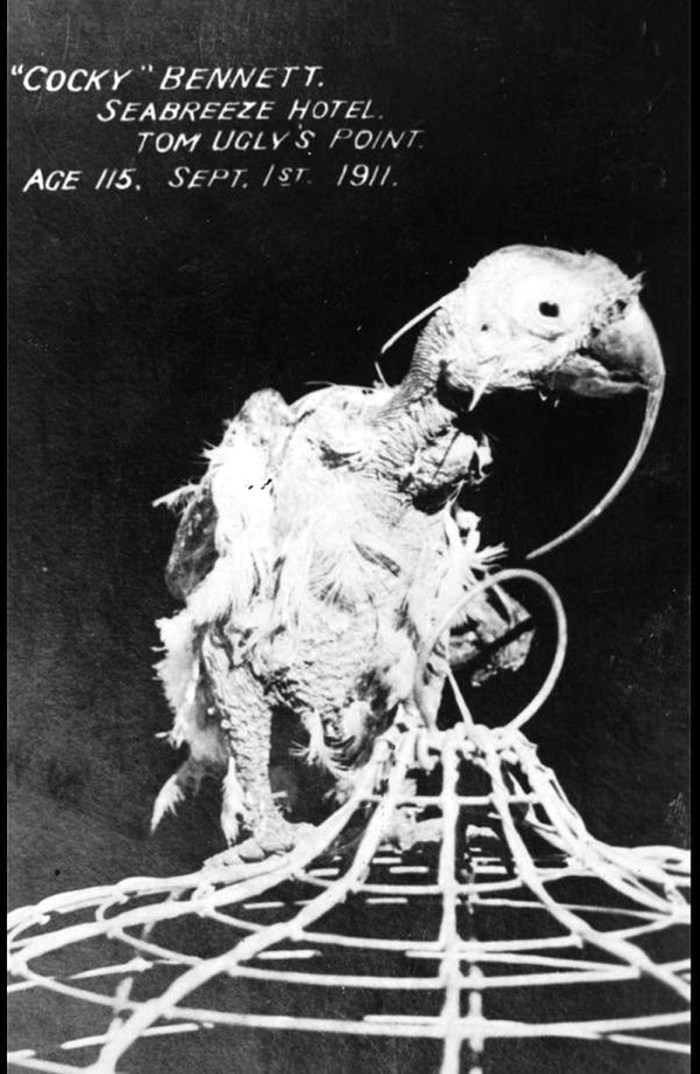 cocky bennett 1919.jpeg