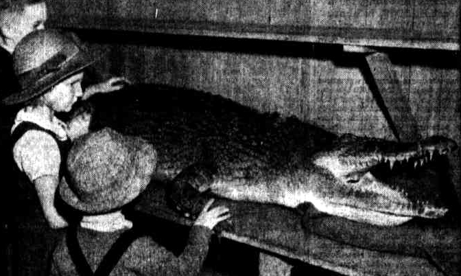 croc royal hotel 1947 maryborough qld