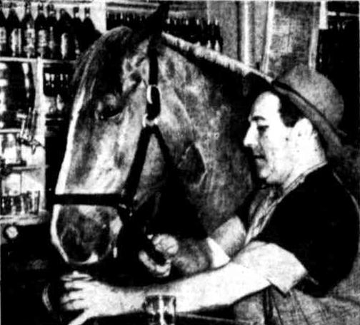Boofer beer drinking horse