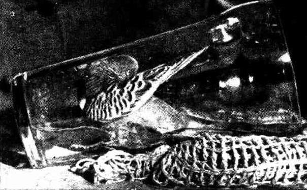 bird-bath-schooner-1951