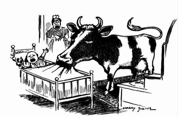 lorne hotel cow