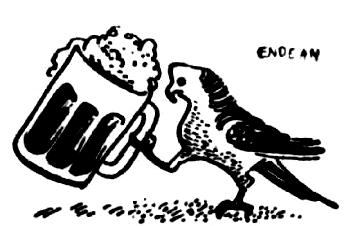 bird drinking