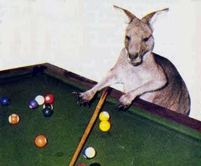 kangaroo pub