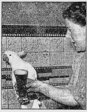 cocky assembly hotel sydney 1946