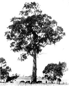 tree for barrels