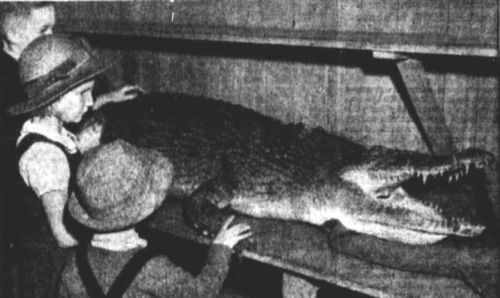 crocodile Maryborough 1947