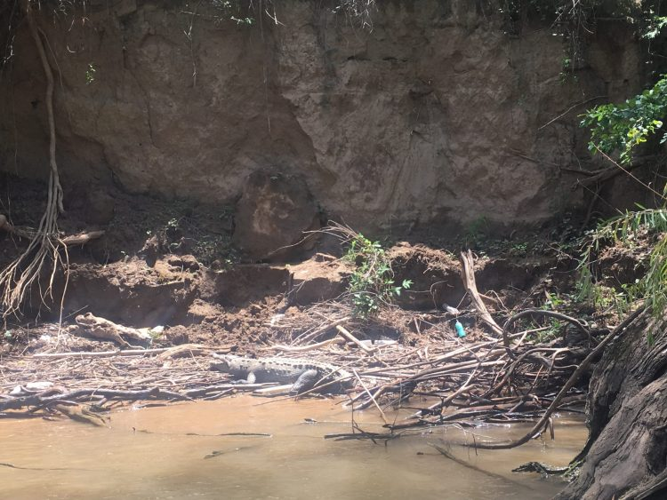 crocodile in sumidero canyon