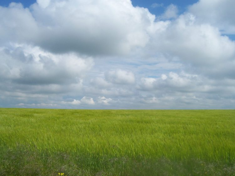A bright green field stretching out to the horizon