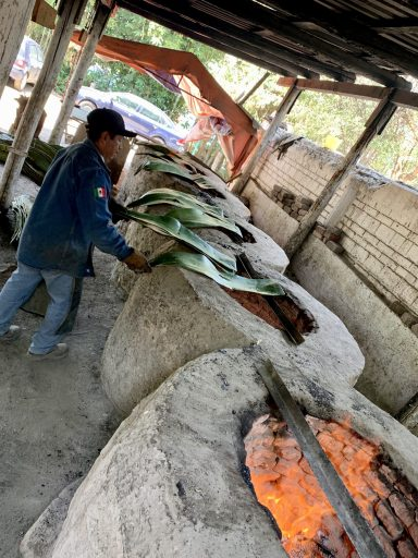 Agave leaves toasting to line the barbacoa pits.