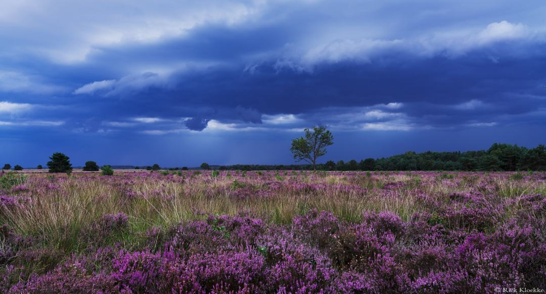 Thunderstorm at the Veluwe